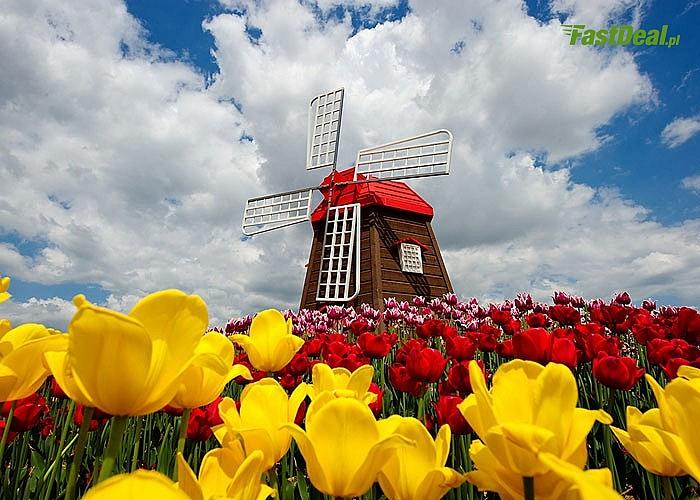 Kwiatowa Holandia