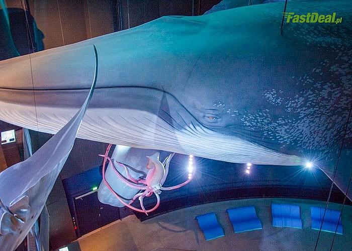 Ozeaneum - sekrety morskich głębin! 1-dniowa wycieczka autokarem klasy LUX! Opieka pilota!