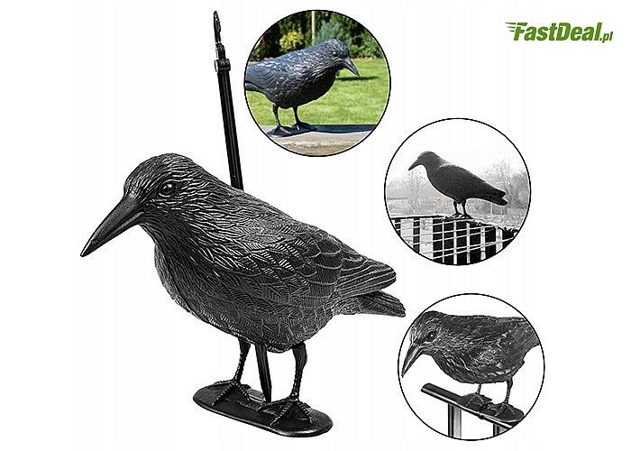 Chroń się przed szkodnikami! Plastikowy kruk odstraszający gołębie, szpaki i inne ptaki.