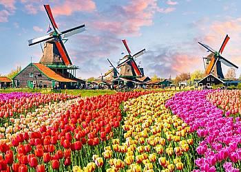Parada Kwiatów