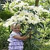 cebule kwiatowe - Lilia drzewiasta Pretty Woman 1 szt